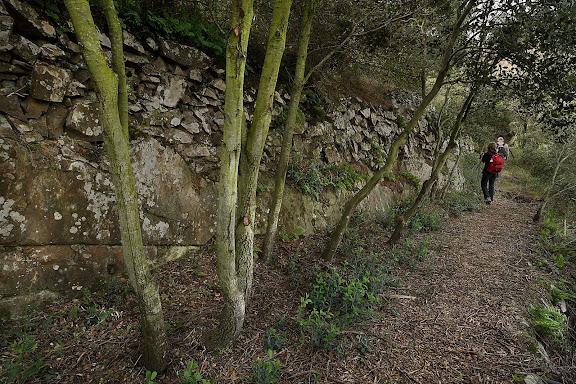 Camí del Pinell, antic camí de ferradura, xarxa de camins del Priorat. DOQ Priorat. Torroja, Priorat, Tarragona