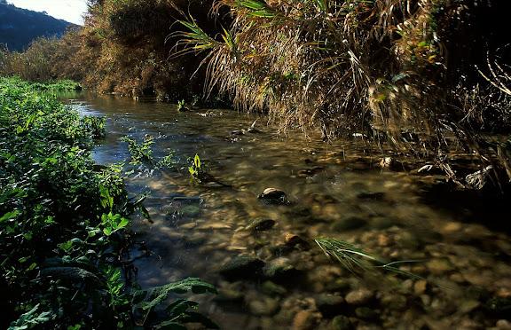 El riu Gaià sota els Vergerars Vilabella, Alt Camp, Tarragona 2001