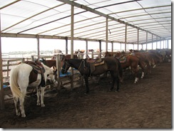 5285 Island Equestrian Center South Padre Island Texas