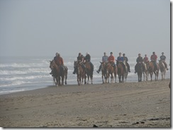 5314 Horses on Beach South Padre Island Texas