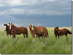 1099 Horses west of Hillsdale WY