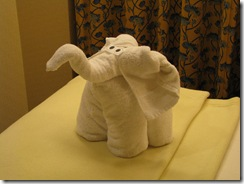4819 Towel Elephant MS Westerdam
