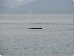 4474 Whale Watching Juneau AK