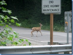 1278 Black Tail Deer West Cascade Oregon Scenic Byway OR