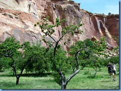 4679 Max Krueger Orchard Capitol Reef National Park UT