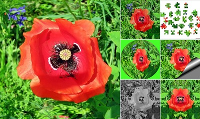 View Poppy flower
