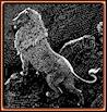 Gustave Doré. El león. Grabado