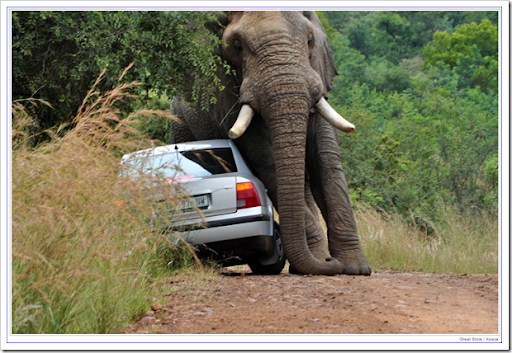 elephant-20110315-1739