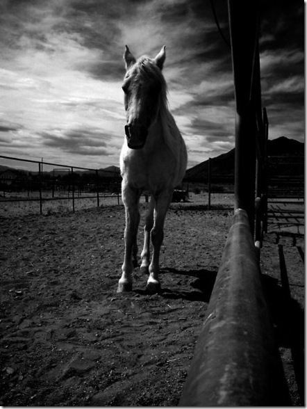 Horse in Black and White