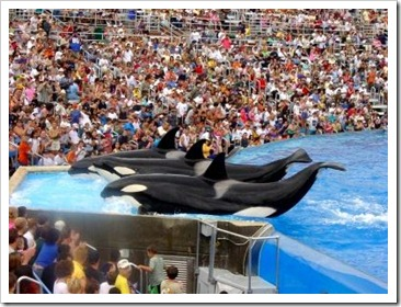 sea world1