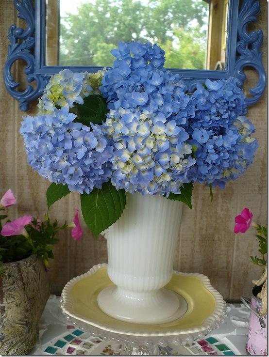 blue hydrangeas in front of a blue mirror