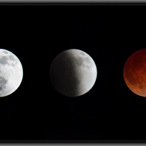 Blood Moon by Doug Redding - Landscapes Starscapes ( blood moon, moon, blood moon composite, moon composite, lunar eclipse, eclipse )
