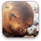 Seal Free Video Wallpaper