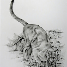 The Landing by Alicia McNally - Drawing All Drawing ( mountian lion, big cats, cougar, wildlife art, wildlife, traditional art, puma, pencil drawing, drawing )