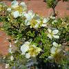 Utah plant species
