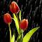 IMG_5626 1599.jpg