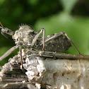 Insecto rueda