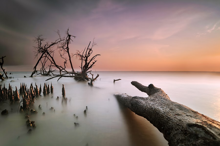 The Beauty Of Light by Fhir .. - Landscapes Waterscapes ( falltree, tree, sunset, selangor, kelanang, seascape, nikon, watersacape )