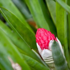 by Steve Bales - Flowers Flower Buds