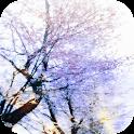 KALEIDO~四季彩の桜で奏でるメヌエット