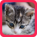 Cute Animals Pictures icon
