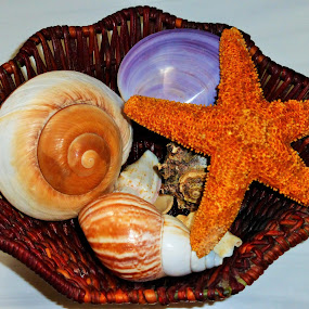 Seashells,still life by Annette Long-Soller - Artistic Objects Still Life ( nature up close artistic object, wicker basket, still life, starfish, seashells )