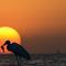 test bird.jpg