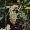 Oriental Garden Lizard & Butterfly