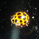 Ladybug in space