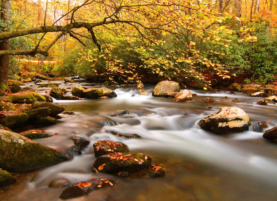 A creek in Smoky Mountain by Mili Shrivastava - Landscapes Waterscapes ( fall colors, waterscape, creek, landscape, smoky mountains,  )