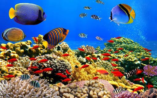 水族馆3D