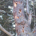 Wood pecker holes