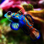 3D colorful fish