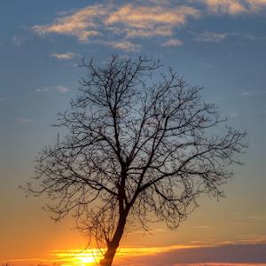 1Musile-Di-Piave---Tree-At-Sunset---Gravel-Road.jpg