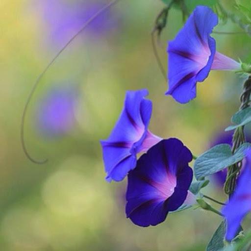 Floral vivid