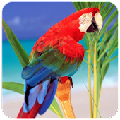 Birds wallpapers +100