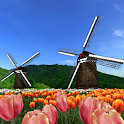 Tulip Fields 360° icon