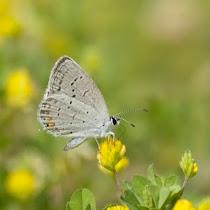 Butterflies and Moths of Southeast USA