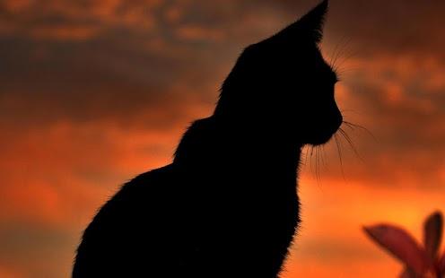 黑貓動態壁紙