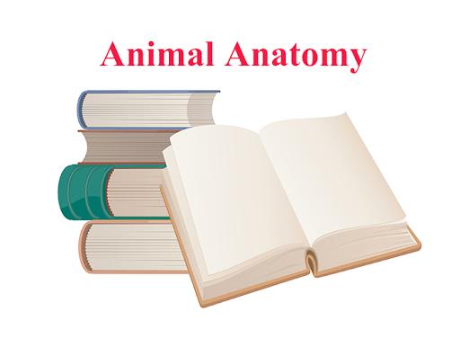 Animal Anatomy E-Book