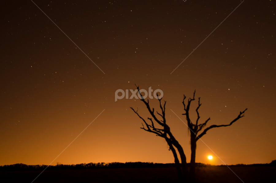 moontree by David Ubach - Landscapes Starscapes ( moon, tree, stars, starscapes, silhouettes, landscape, nightscape )