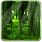 RealDepth Forest Free LWP icon