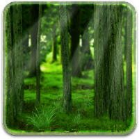 RealDepth Forest Free LWP 1.1.1