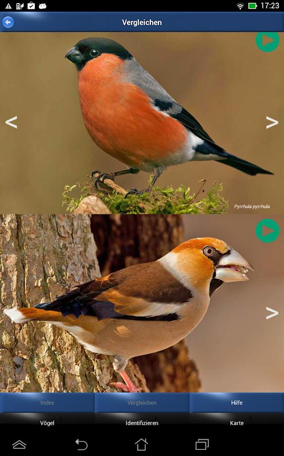 Vogel Im Garten Fliegt Nicht : Vogel id v?gel im garten android apps ...