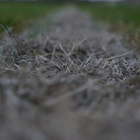 Sideline. by Robin Watson - Nature Up Close Leaves & Grasses ( field, football, sidelines, focus, close up )