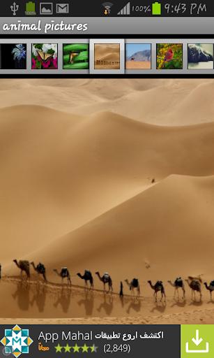 玩攝影App|8- Animals wallpaper 2014免費|APP試玩