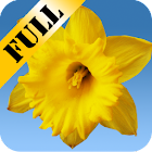 Daffodils Live Wallpaper icon