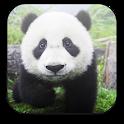Panda Free Video Wallpaper icon