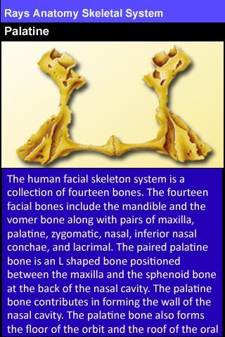 Rays Anatomy Skeletal System- screenshot
