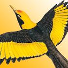 Morcombe's Birds of Aus (Lite) icon